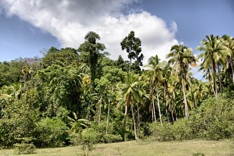 Джунгли на острове Самал