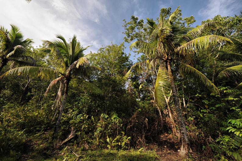 samal-jungle