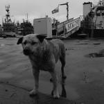 Пёс, охраняющий корабли.