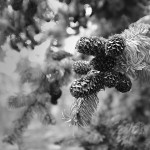 В лесу на склоне горы Пидан, Приморский Край.