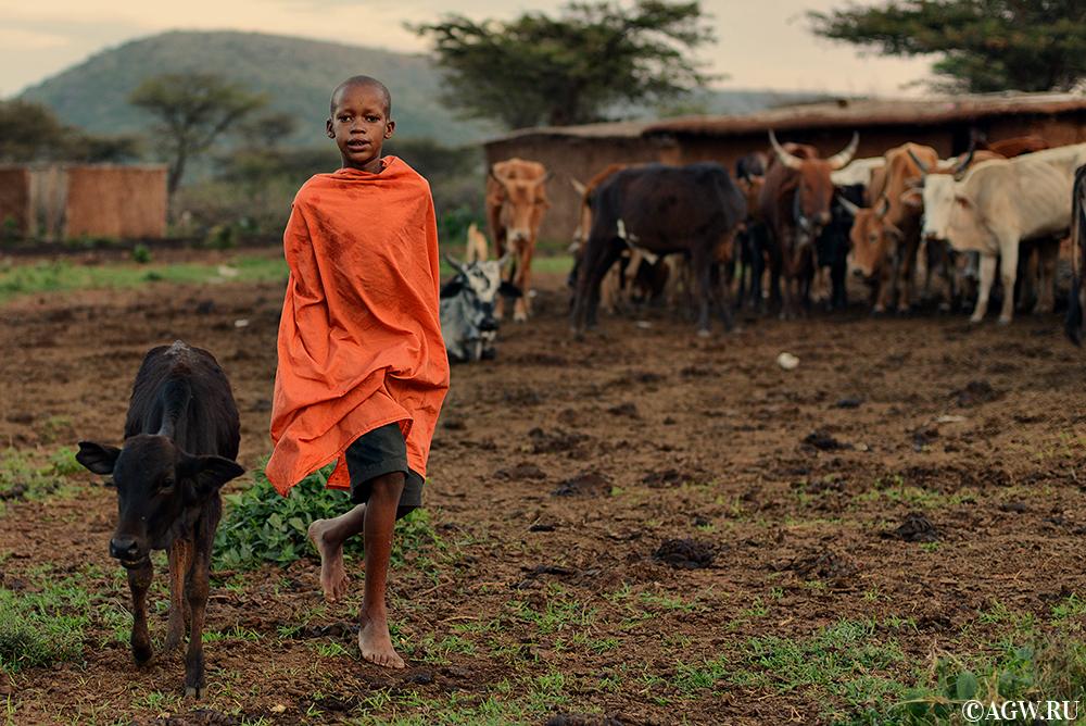 В деревне масаи
