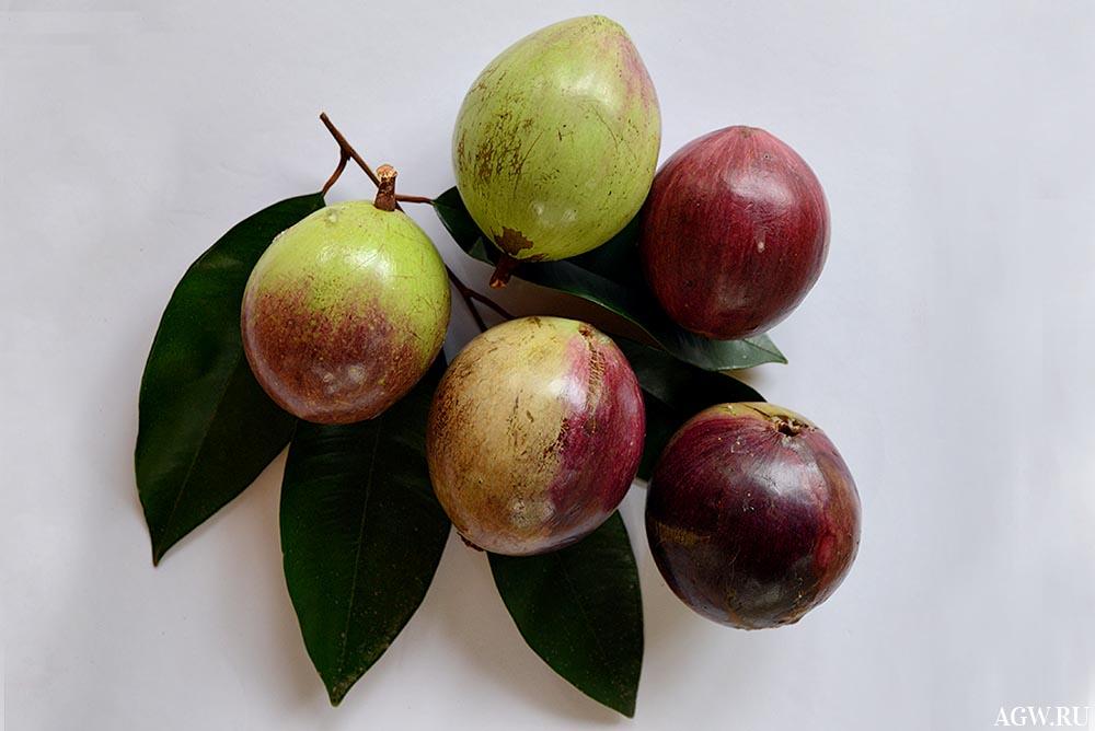 Плоды Звездного яблока на листе.